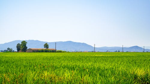Free stock photo of paddy field, spain