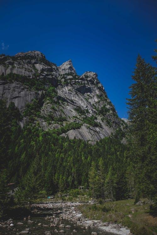 Fir forest growing near rocky mountain under blue sky
