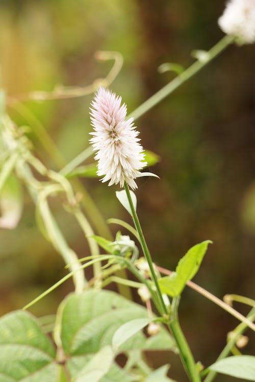 Fotos de stock gratuitas de césped, crecimiento, flor, flora