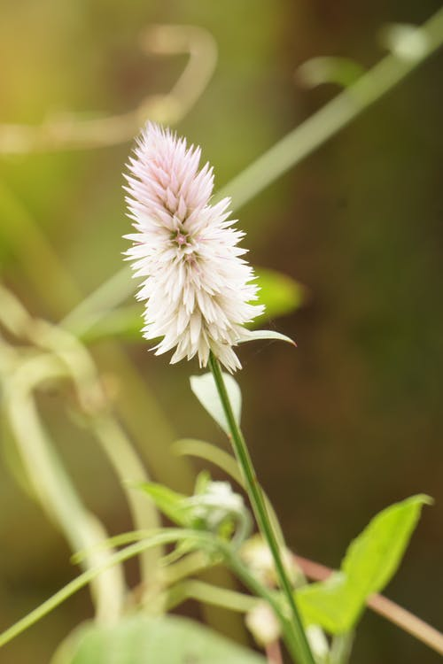 Безкоштовне стокове фото на тему «квітка, Природа»