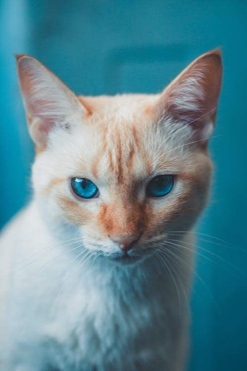 Photos gratuites de adorable, amical, animal