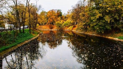 Základová fotografie zdarma na téma barvy podzimu, město