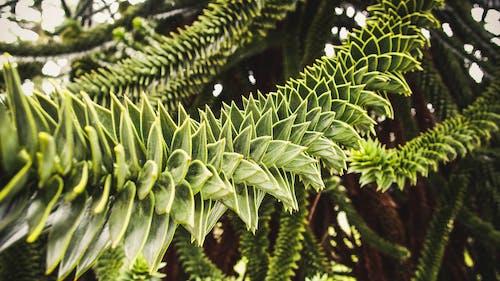 Základová fotografie zdarma na téma příroda, rostlina, strom, zahrada