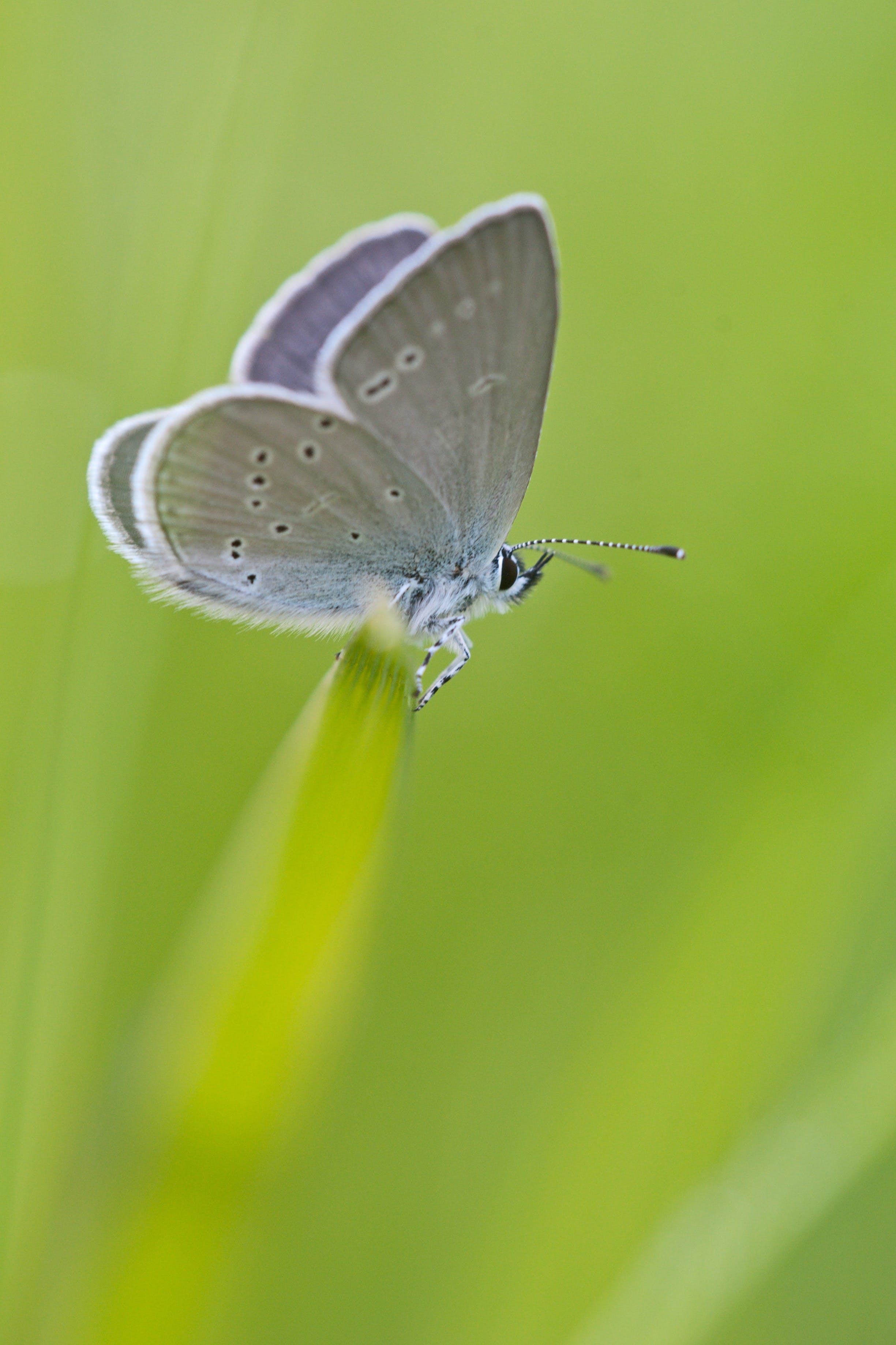 Gray White Moth Perched on Green Grass