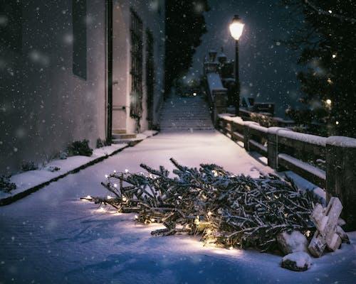 Kostnadsfri bild av gata, gatubelysning, god Jul, jul
