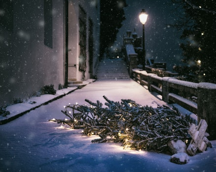 Free stock photo of cold, snow, light, night