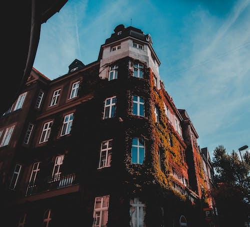 Foto profissional grátis de aparência, apartamentos, arquitetura, árvores