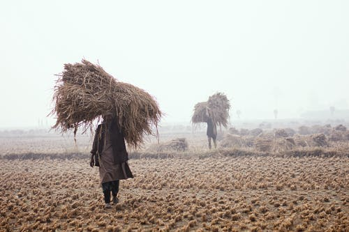 คลังภาพถ่ายฟรี ของ กลางแจ้ง, การท่องเที่ยว, การทำฟาร์ม