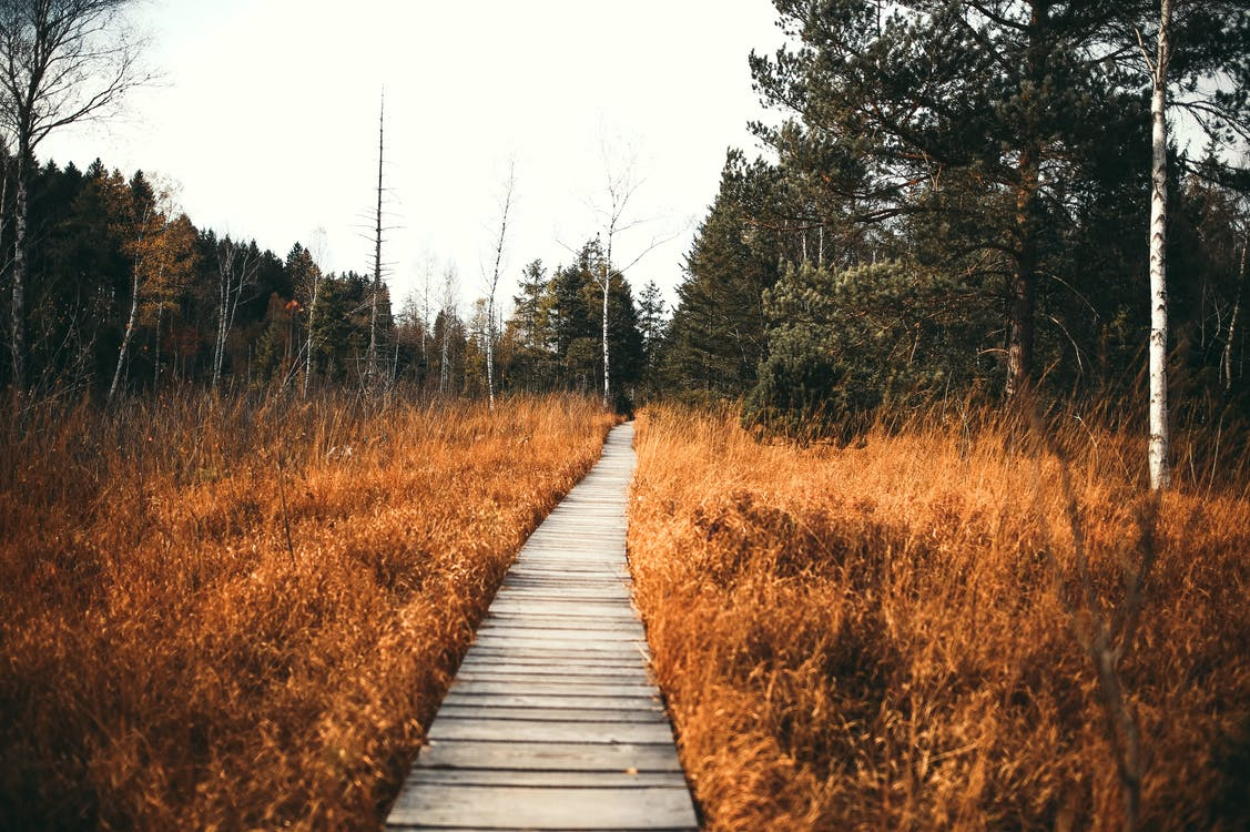 Pathway Along Brown Grass