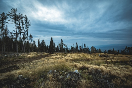 Free stock photo of nature, sky, cloudy, forest