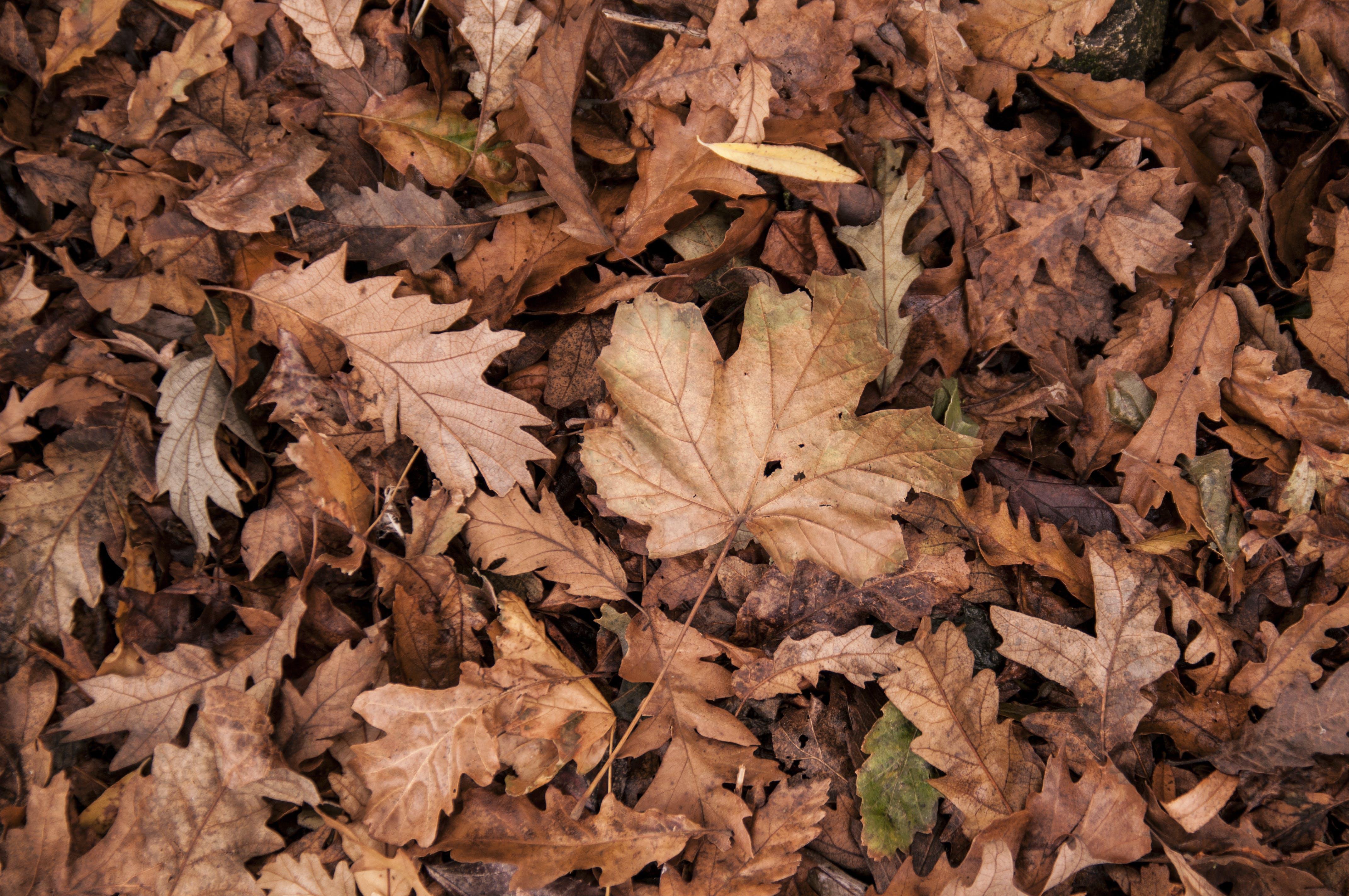 간, 건조한, 계절, 나뭇잎의 무료 스톡 사진
