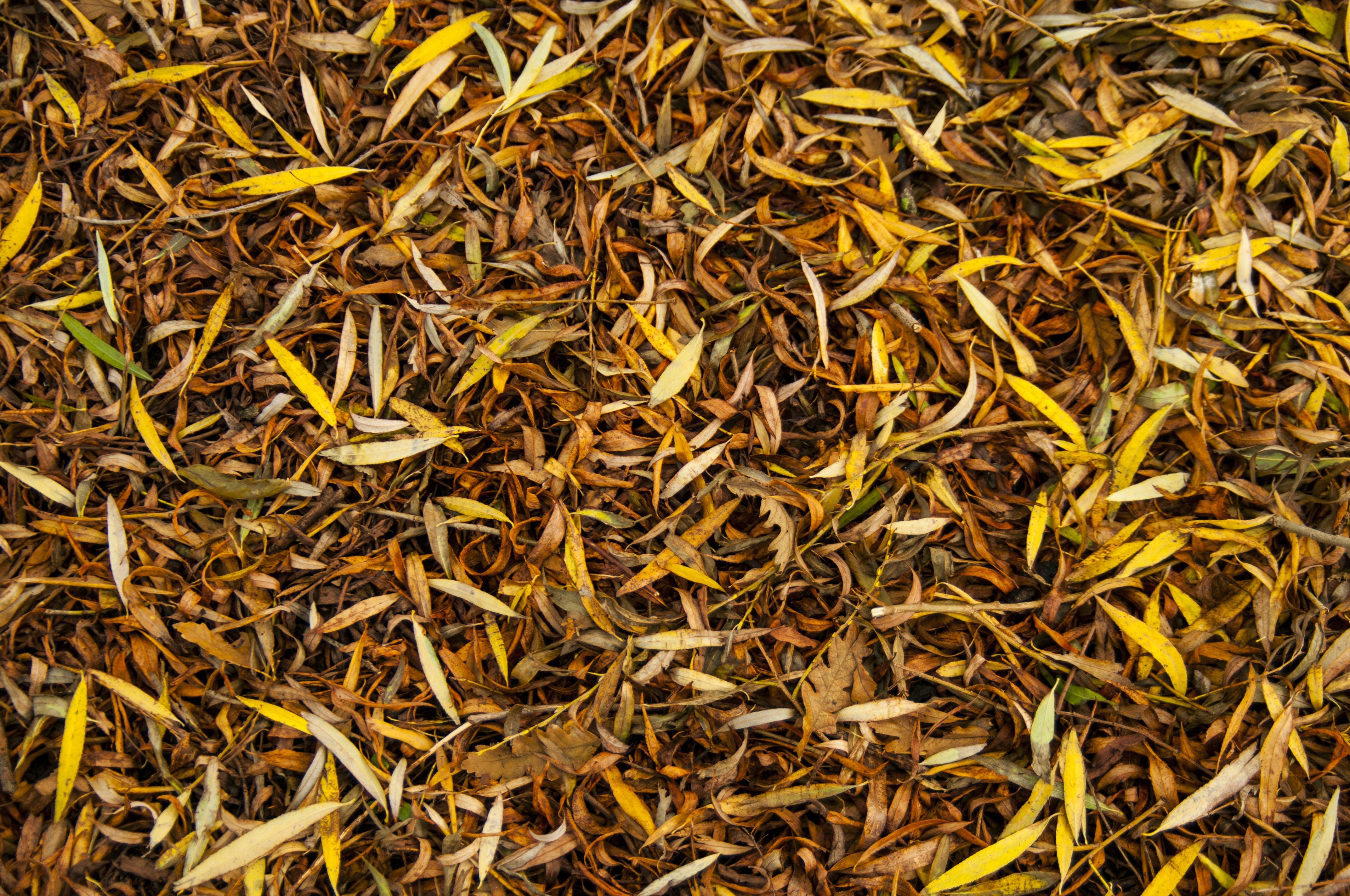 Foto stok gratis daun gugur, dedaunan, gersang, musim