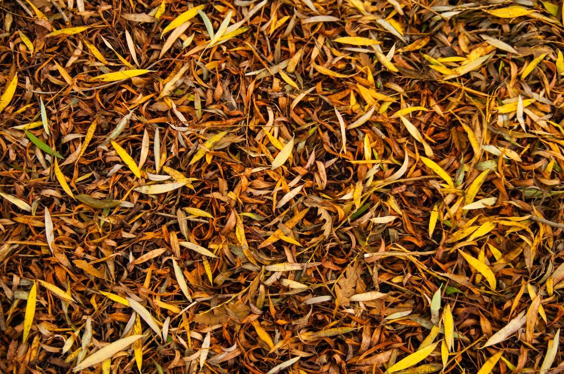 follaje, follaje de otoño, molido