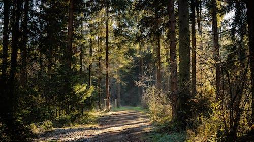 Imagine de stoc gratuită din arbori, autostradă, cale