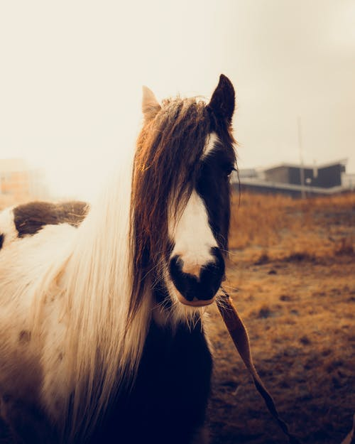Adorable horse with long mane standing in farm