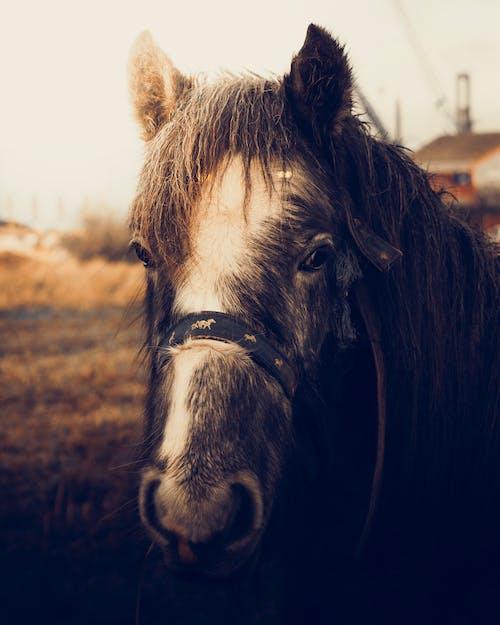 Black horse standing on grassy pasture