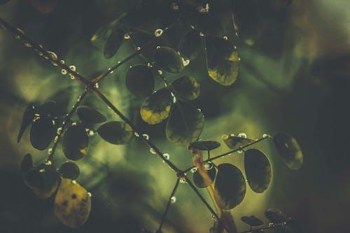 Foto profissional grátis de água, árvore, aumentar, aumento