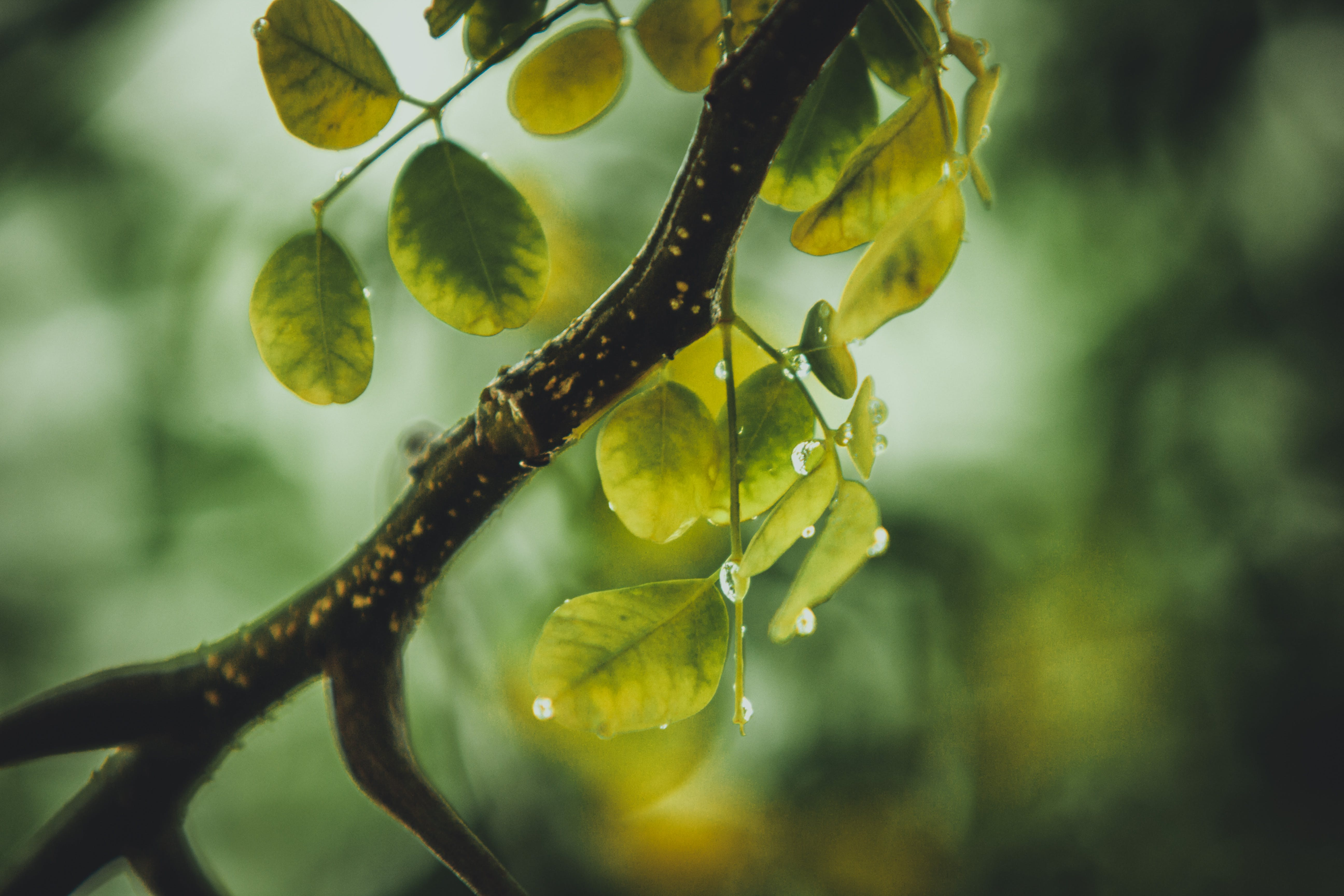 Green Leafed Plant With Water Droplets