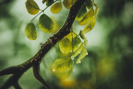 Free stock photo of plant, leaves, tree, dew