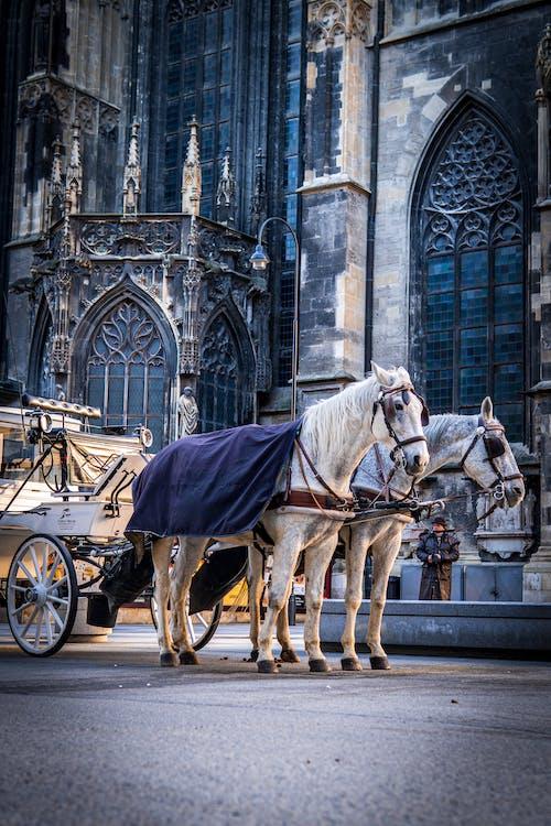 Fotos de stock gratuitas de arquitectura, atracción, caballo