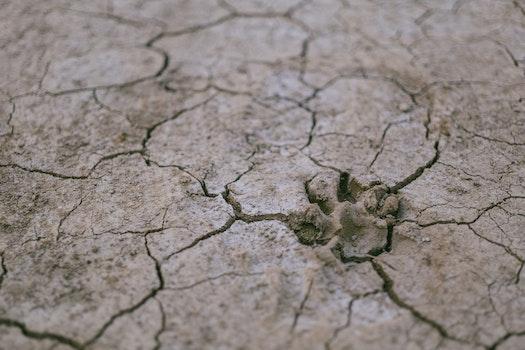 Free stock photo of desert, dry, ground, environment