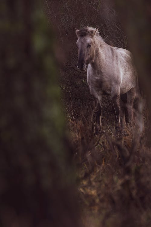 Free stock photo of horse, horses, wild horse