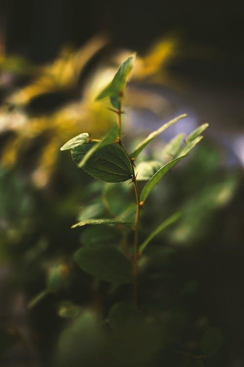 Free stock photo of dark green leaves, daylight, garden