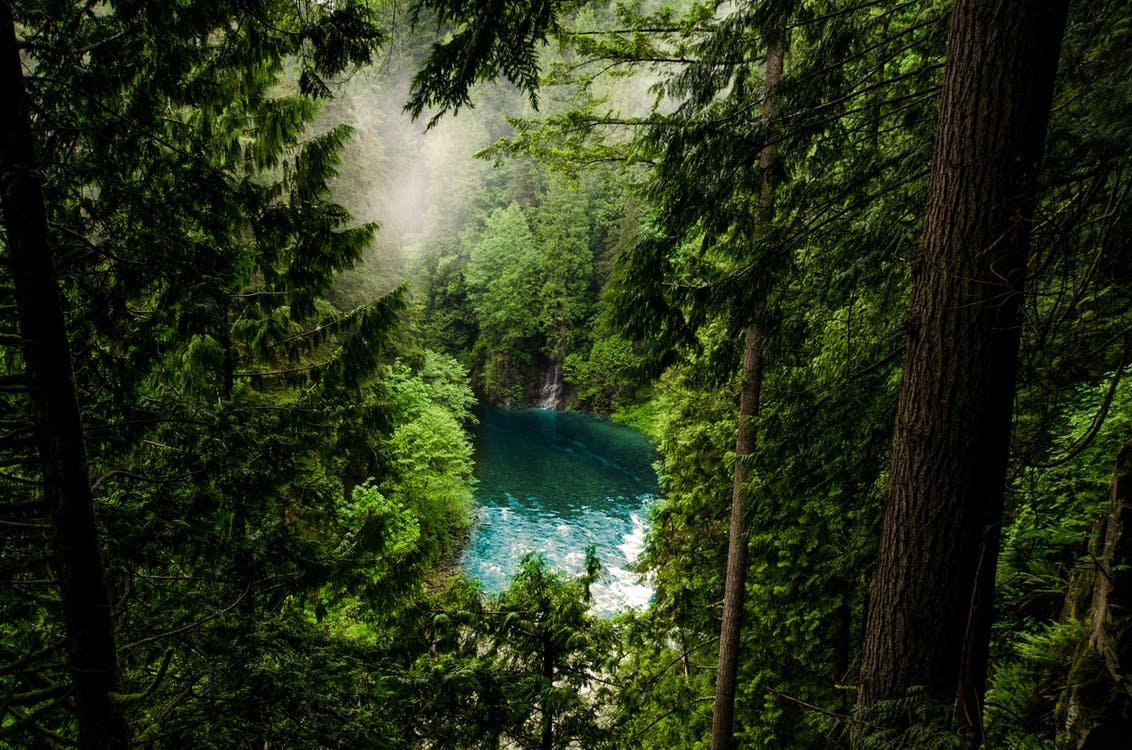 Body of Water in Forest