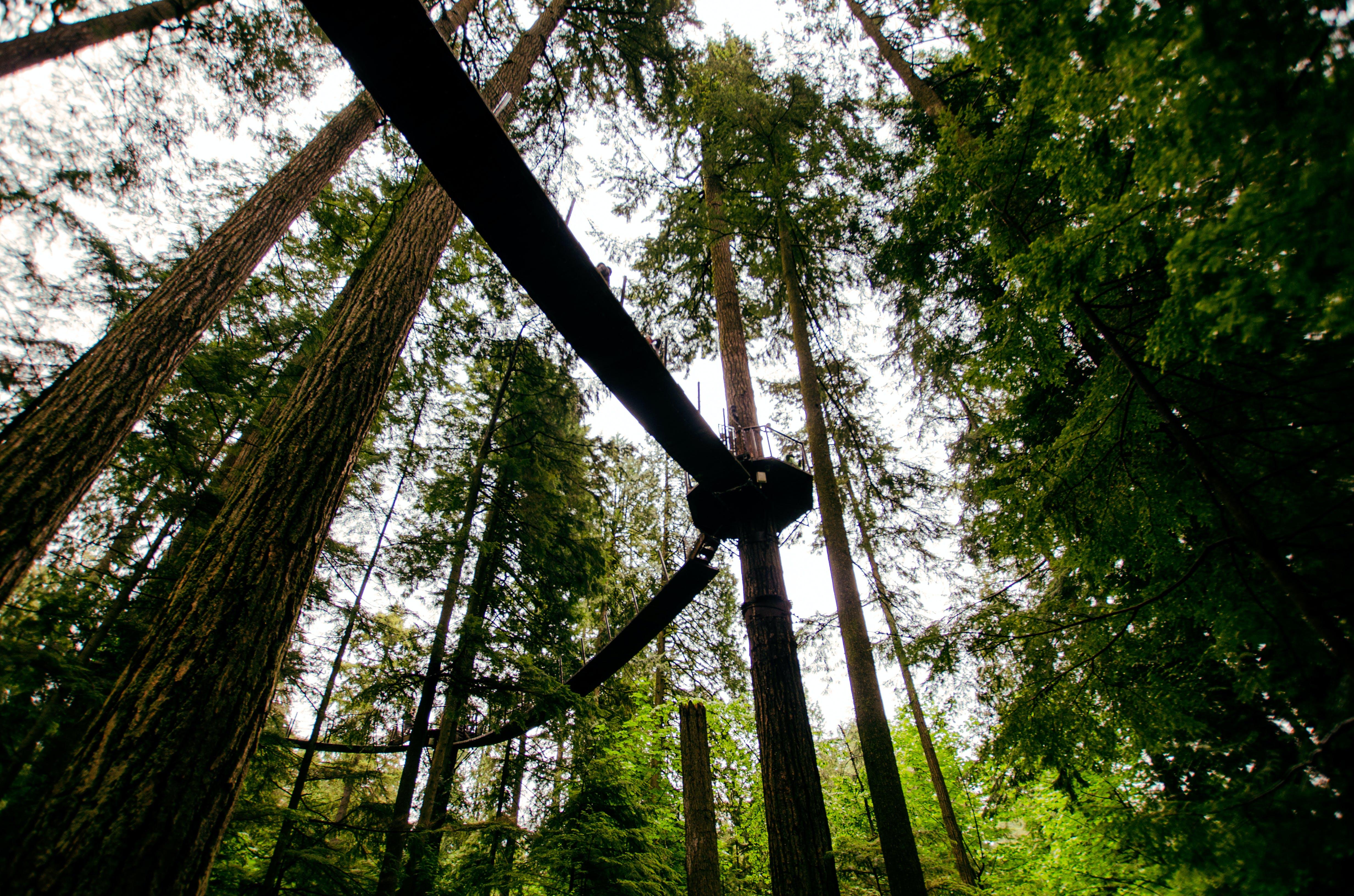 Free stock photo of light, landscape, nature, weather