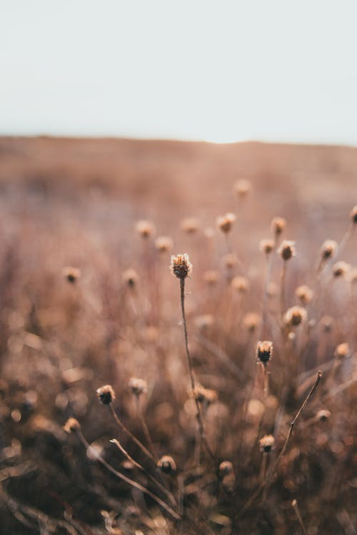Gentle dry plants growing on golden grassy meadow on sunny day in countryside
