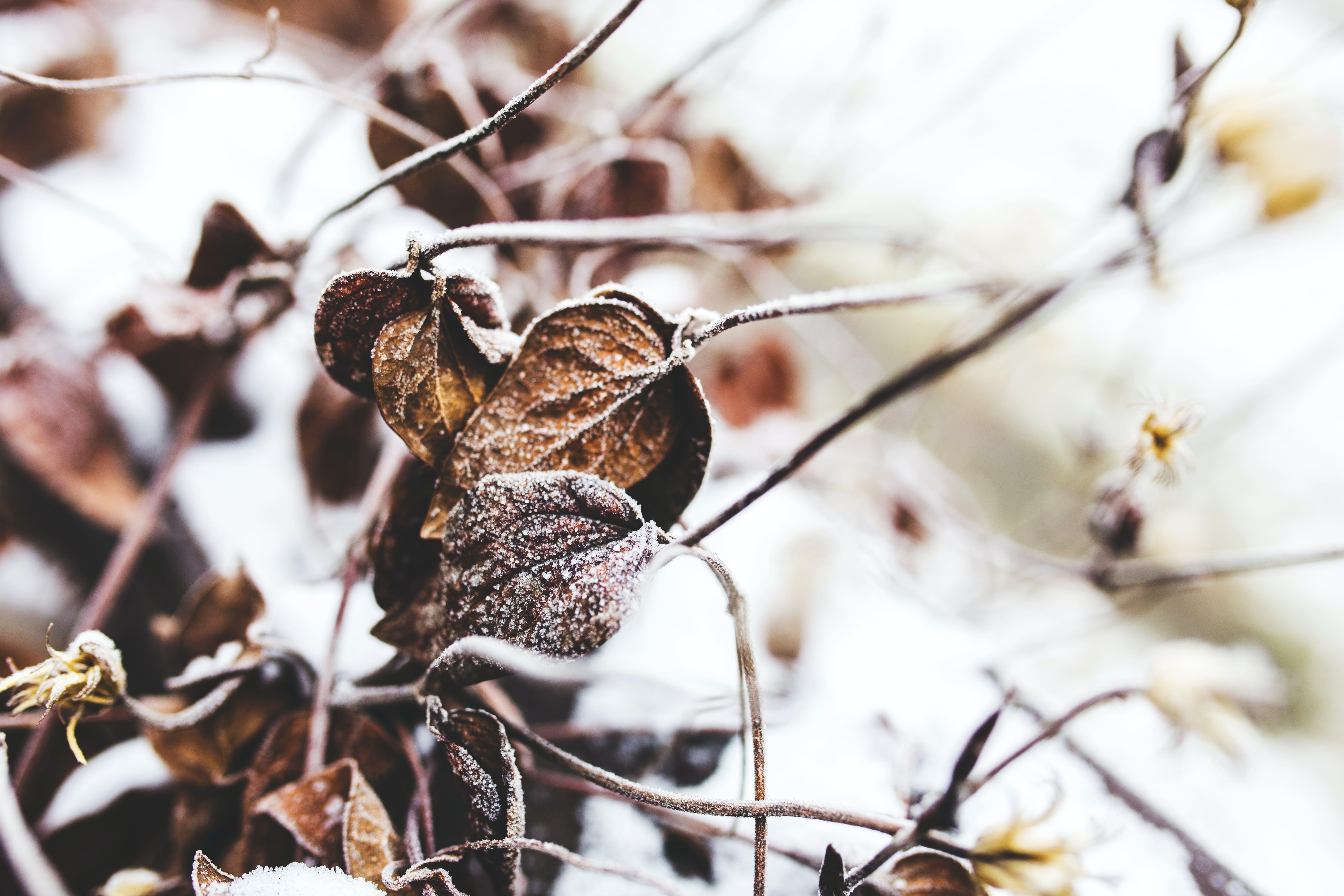 คลังภาพถ่ายฟรี ของ น้ำค้างแข็ง, ปิด, พฤกษา, ฤดูกาล