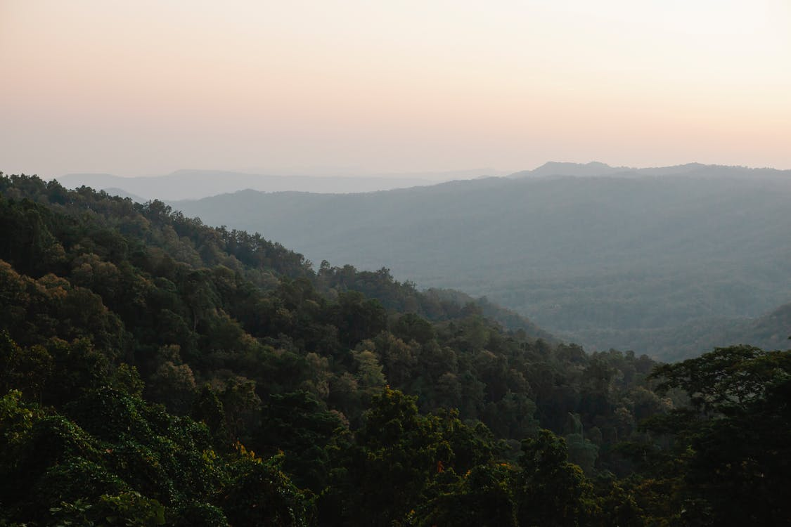 Breathtaking landscape of lush green forest growing on slopes of mountains against cloudless sunset sky