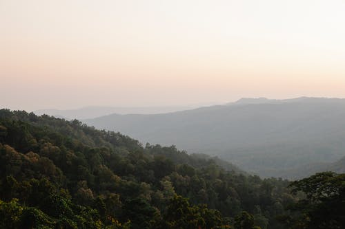 Picturesque landscape of high mountains covered with verdant trees in thick fog in orange dawn