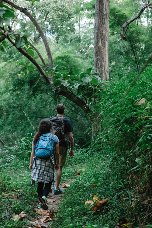 Back view of anonymous couple of hikers with rucksacks walking on narrow path in lush green forest