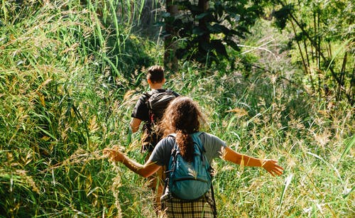 Back view of anonymous backpackers on path between high plants in green forest in back lit