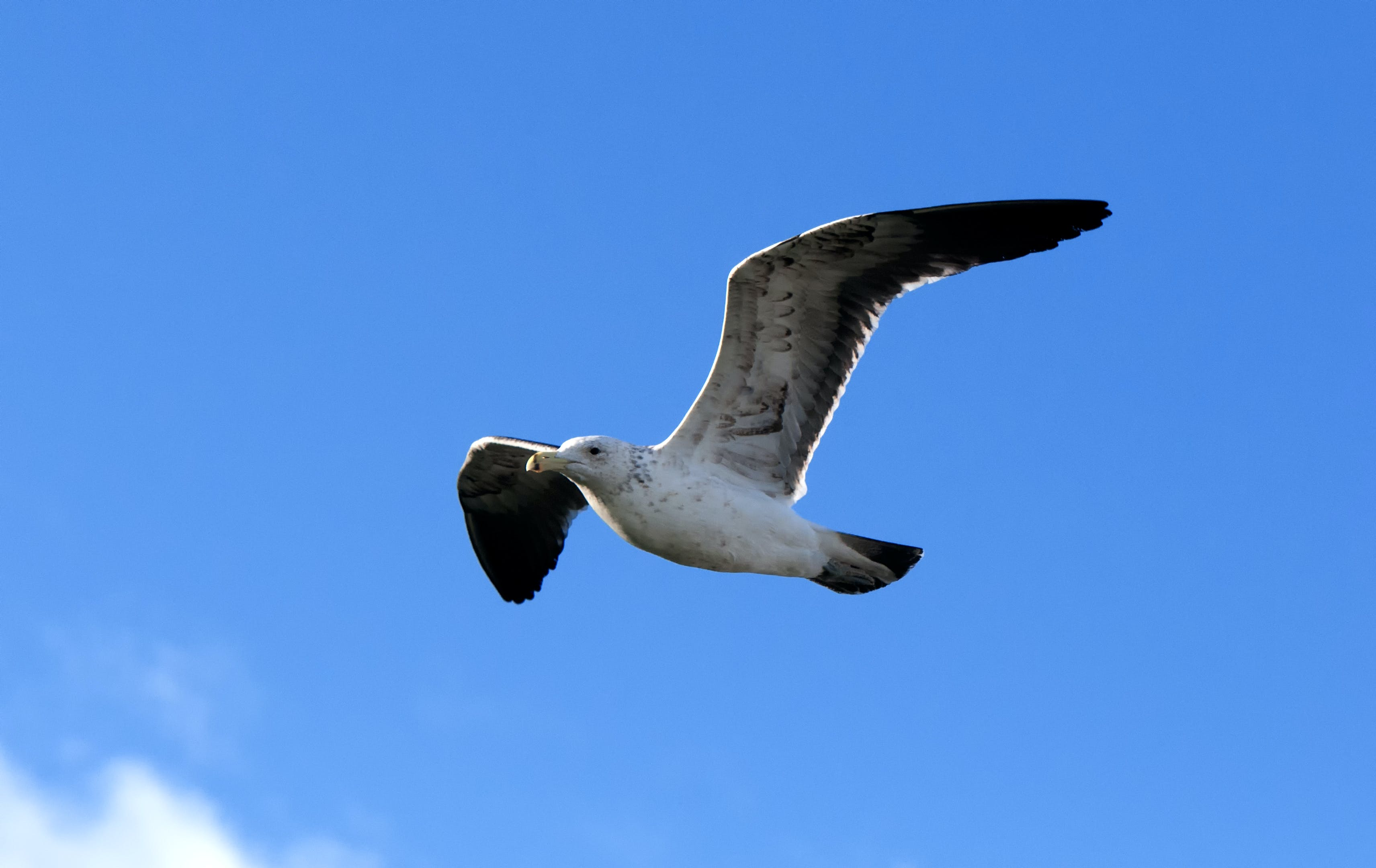 Základová fotografie zdarma na téma denní světlo, křídla, let, létání