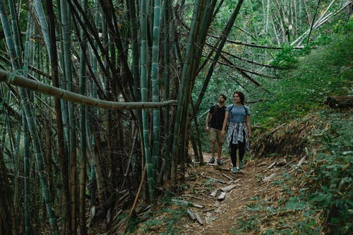 Full body of unrecognizable young female and male travelers in casual clothes walking on narrow pathway among bamboo trees during hiking trip