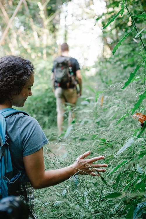 Back view of crop positive young female traveler touching green leaves of lush shrubs while walking in forest with unrecognizable man