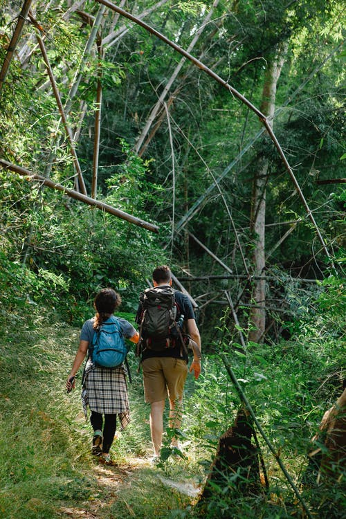 Back view of anonymous couple on casual clothes and backpacks walking together on narrow path amidst lush green trees during hiking trip in forest on sunny day