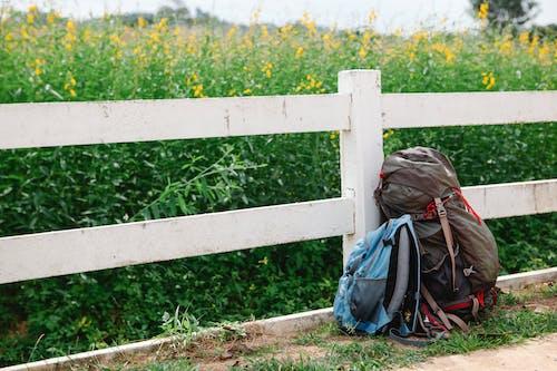 黑色外套和棕色背包站在黃色的花田前的女人