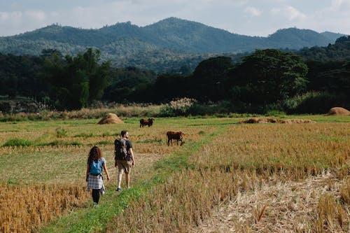 茶色の芝生のフィールドを歩く男と女