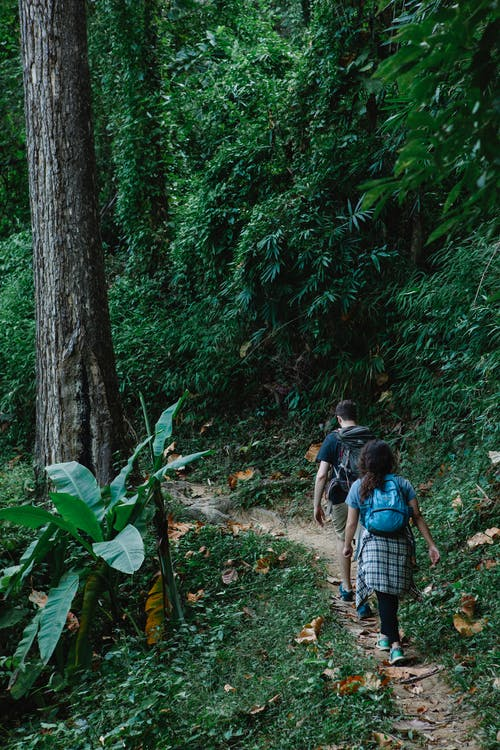 Anonymous couple walking in lush forest during hiking trip