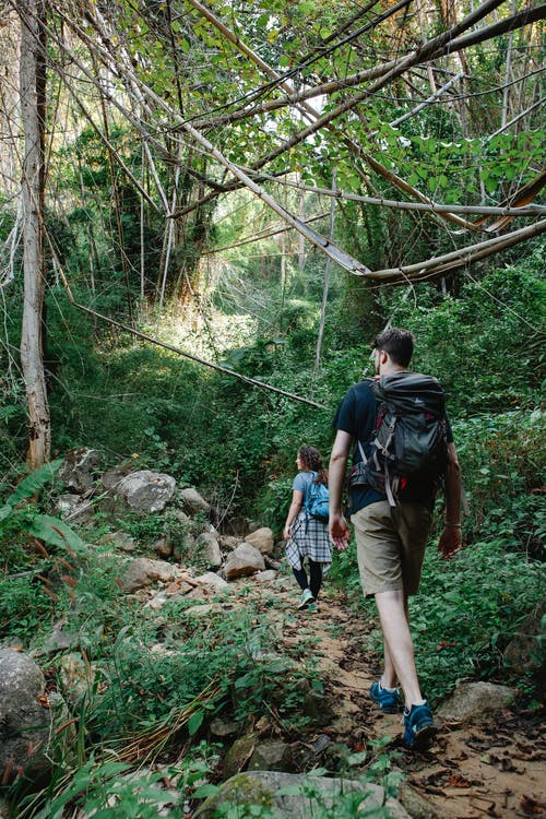 Back view of unrecognizable young male traveler in casual clothes with backpack walking along rough narrow trail with girlfriend during trekking in lush green woods on sunny day