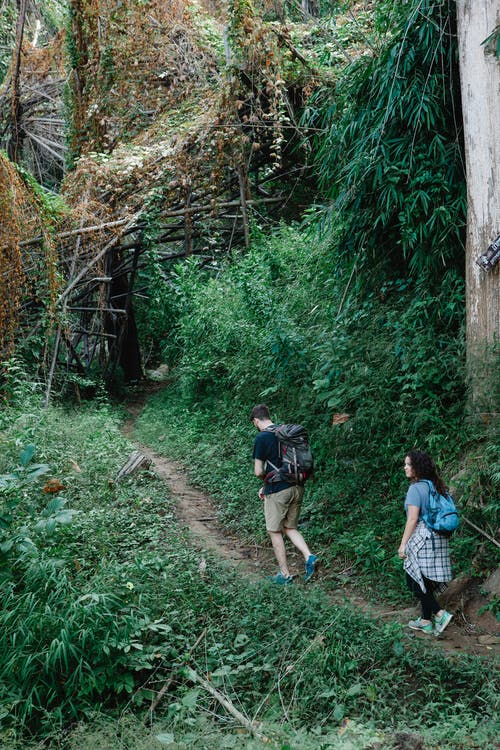 Anonymous couple exploring lush green forest during hiking trip