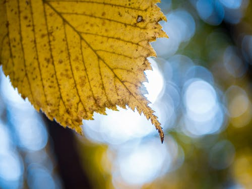 Selective Focus Photography of Yellow Leaf