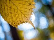 light, nature, leaf