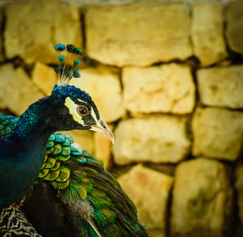 phototgraphy, 克羅地亞, 印度, 和平 的 免费素材照片