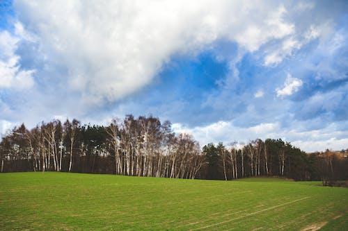 Foto d'estoc gratuïta de arbres, blau, boscos, camp