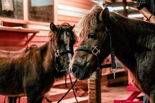 Çiftlik, Evcil Hayvanlar, hayvanlar içeren Ücretsiz stok fotoğraf