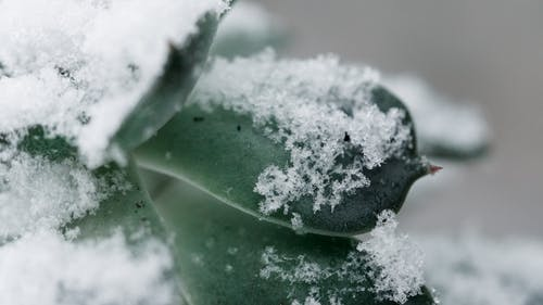 Free stock photo of frost, plant, snow, snowing
